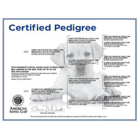 AKC-Certified Puppy Pedigree