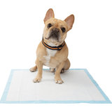 Frisco Training & Potty Pads, 22-in x 23-in