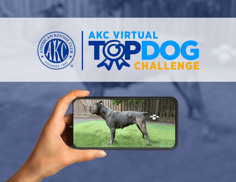 AKC Virtual Top Dog Challenge III Entry