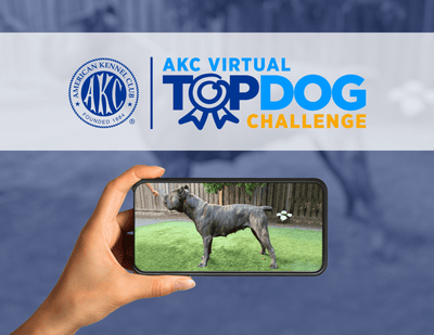AKC Virtual Top Dog Challenge II Entry