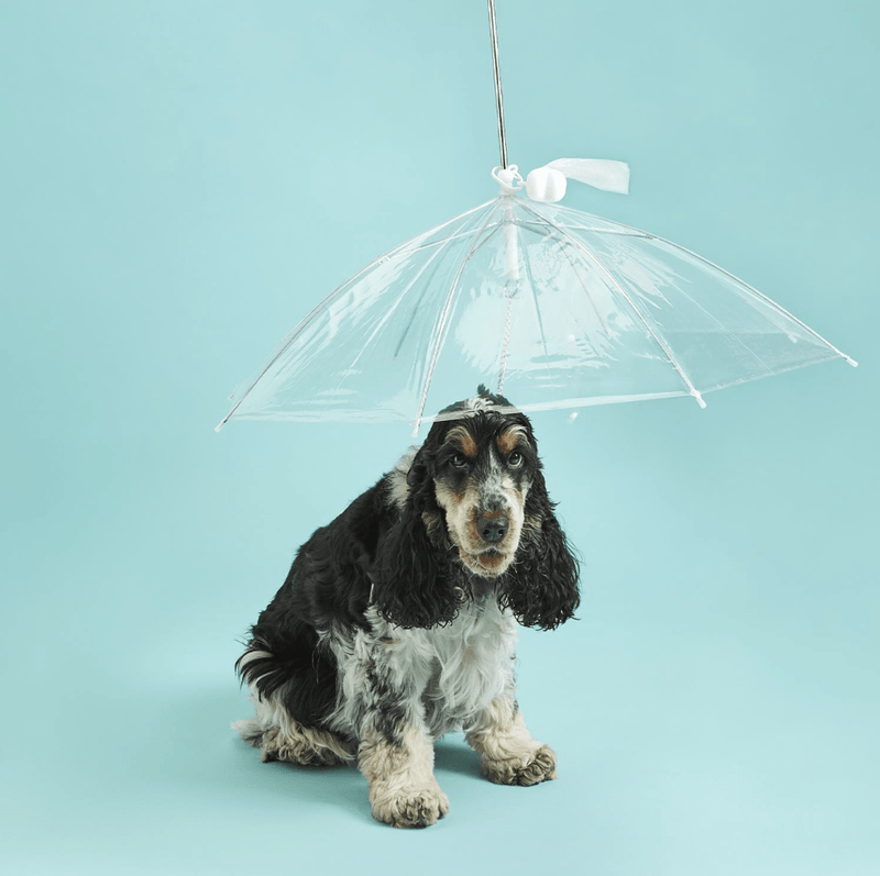 Down Paw Pet Umbrella with White Bone Shaped Waste Bag Holder