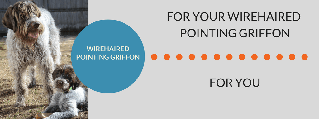 Wirehaired Pointing Griffon Products | AKC Shop