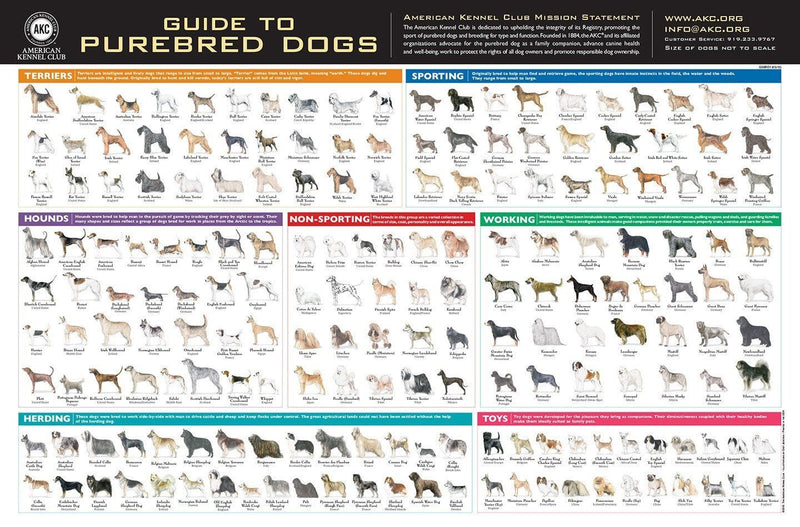 AKC Breeds Poster (folded, shipped in an envelope)
