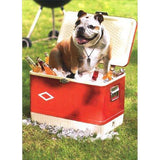 Bulldog on cooler - Father's Day Card