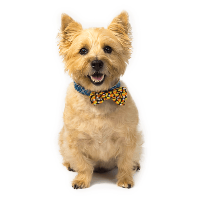 Candy Corn Attachable Bow Tie