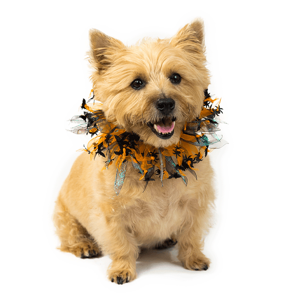 Halloween Party Collar