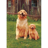 Big/Little Golden Retriever - Father's Day Card