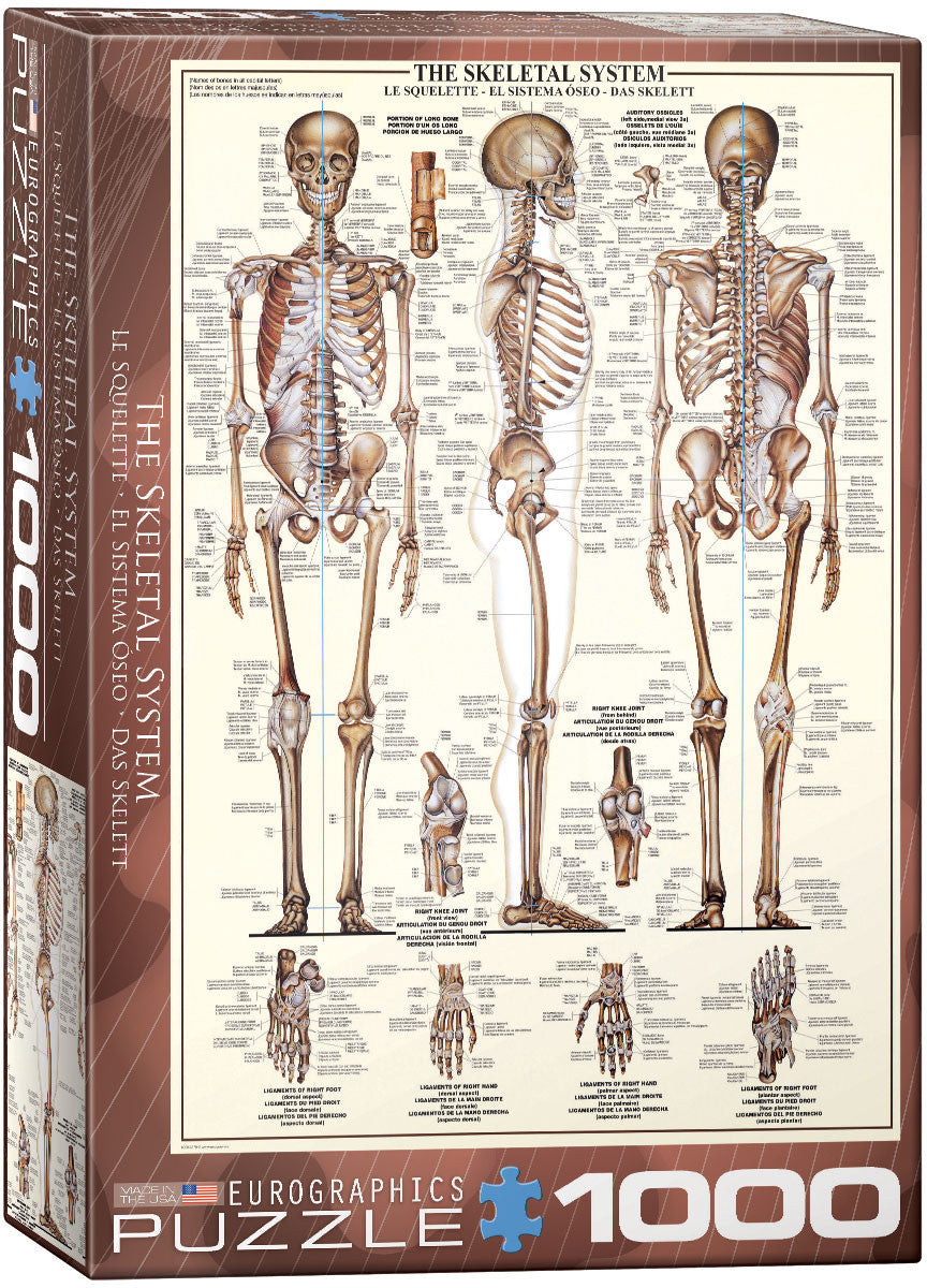 EuroGraphics Puzzles The Skeletal System