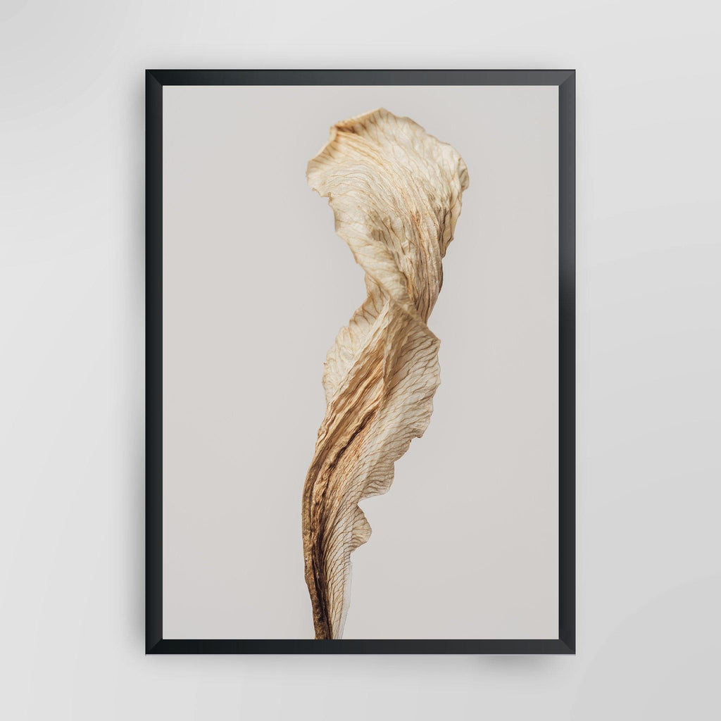 Dried Lily Flower
