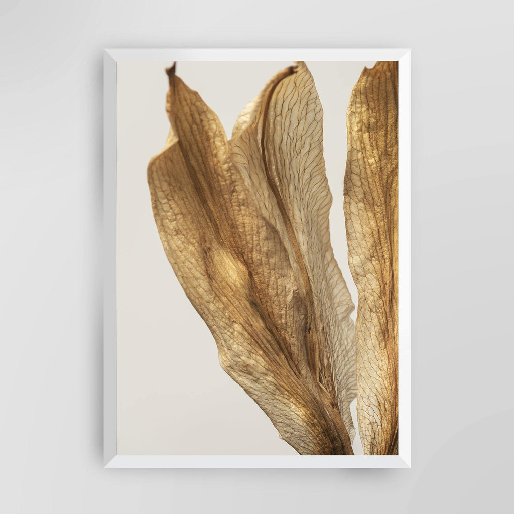 Dried Lily Flower IV