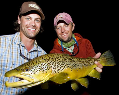 Gator brown trout!