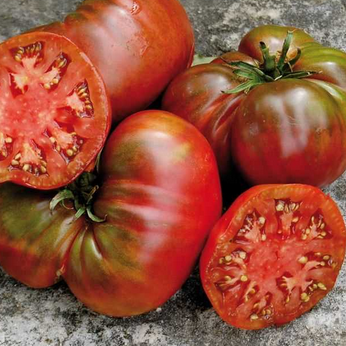 Tomato Plant - Large Barred Boar