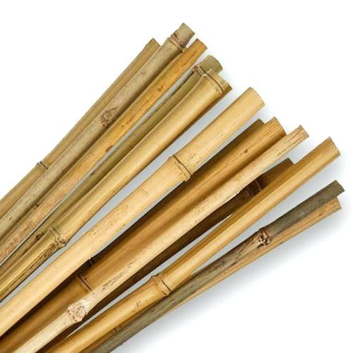 Bamboo Canes 8ft pack of 10