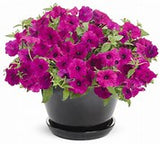 PETUNIA (PW SUPERTUNIA) 4""