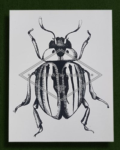 Original Beetle Illustration