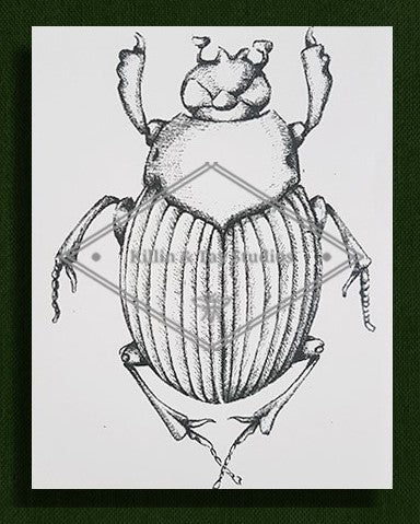 Original Beetle Ink Drawing