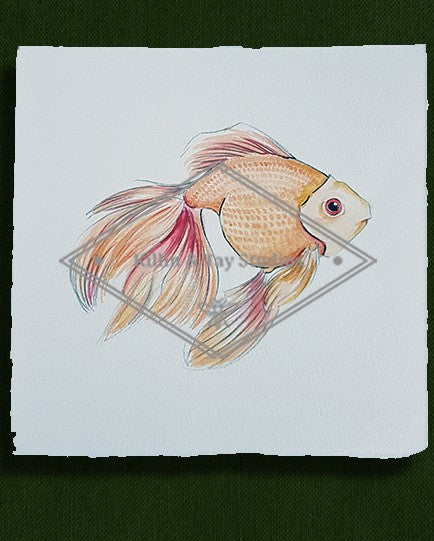 Original Goldfish Watercolour Painting