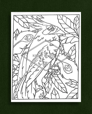 Creatures in Colour: Nightjar Colouring Page