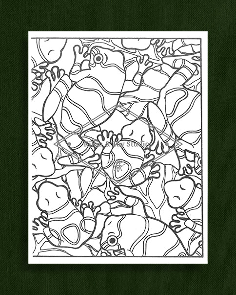 Creatures in Colour: Frog Colouring Pages