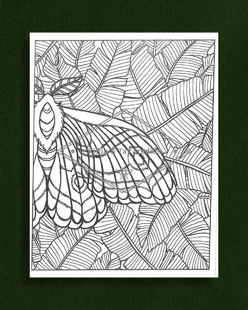 Creatures in Colour: Moth and Leaves Colouring Page
