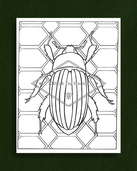 Creatures in Colour: Beetle Colouring Page