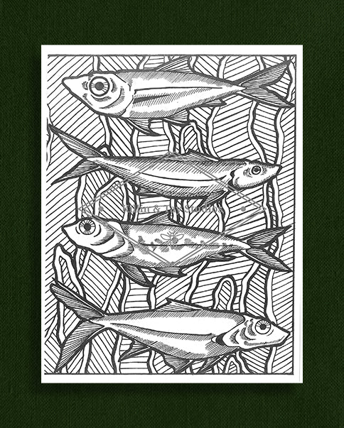 Creatures in Colour: Fish Colouring Page