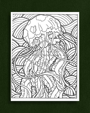 Creatures in Colour: Jellyfish Colouring Page