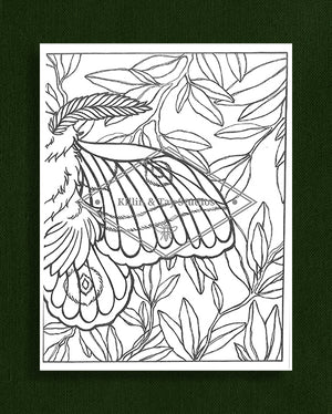 Creatures in Colour: Moth Colouring Page