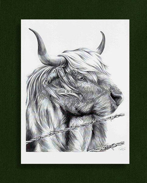 Highland Cow Watercolour Art Print