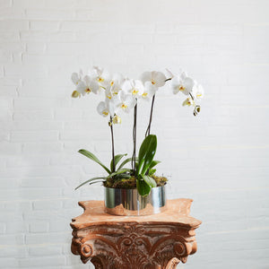 Orchids delivered - White orchid flower