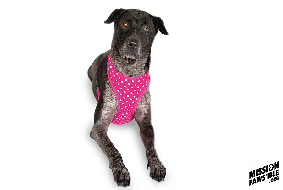 Polka Face Pink Harness