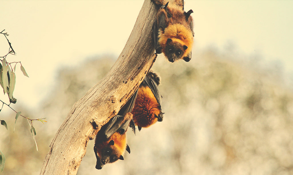 Bats Emerge From Hibernation In The Spring
