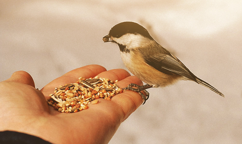 February Is National Bird Feeding Month