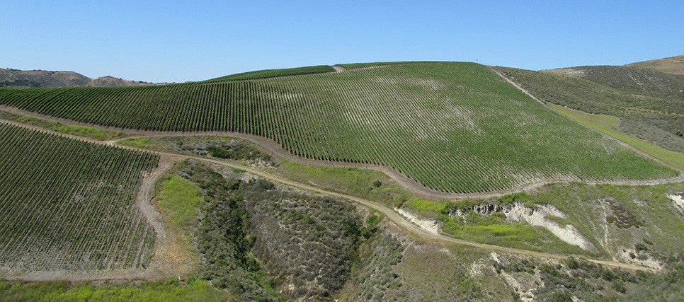 Rita's Crown Vineyard