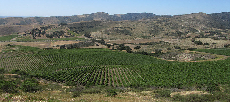 John Sebastiano Vineyard