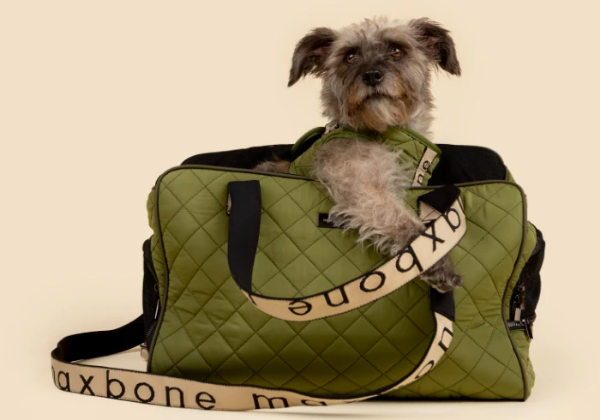 dog in olive sport carrier bag