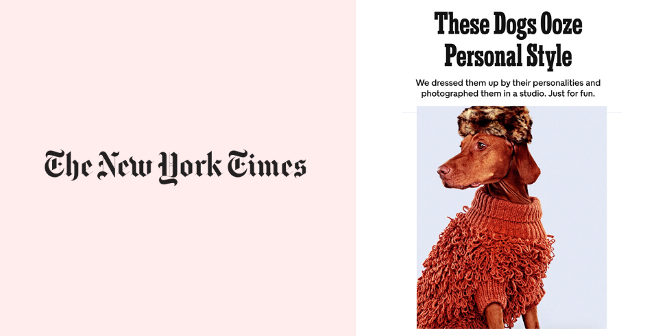 ny times dogs fashion