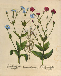Old print of red and blue flowers