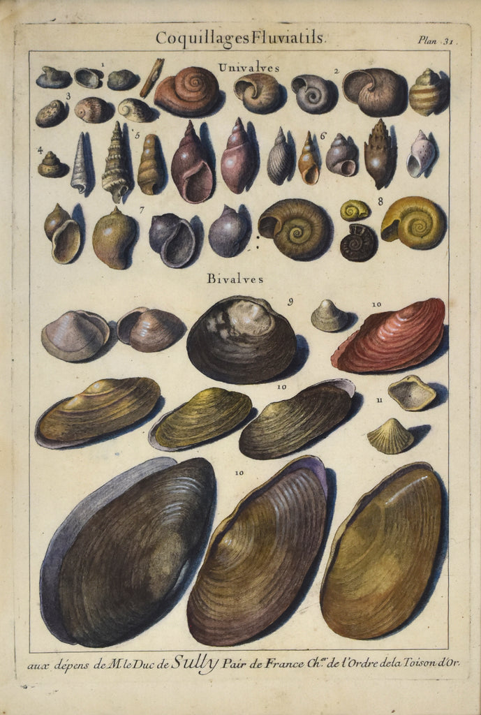 Antique print of sea shells