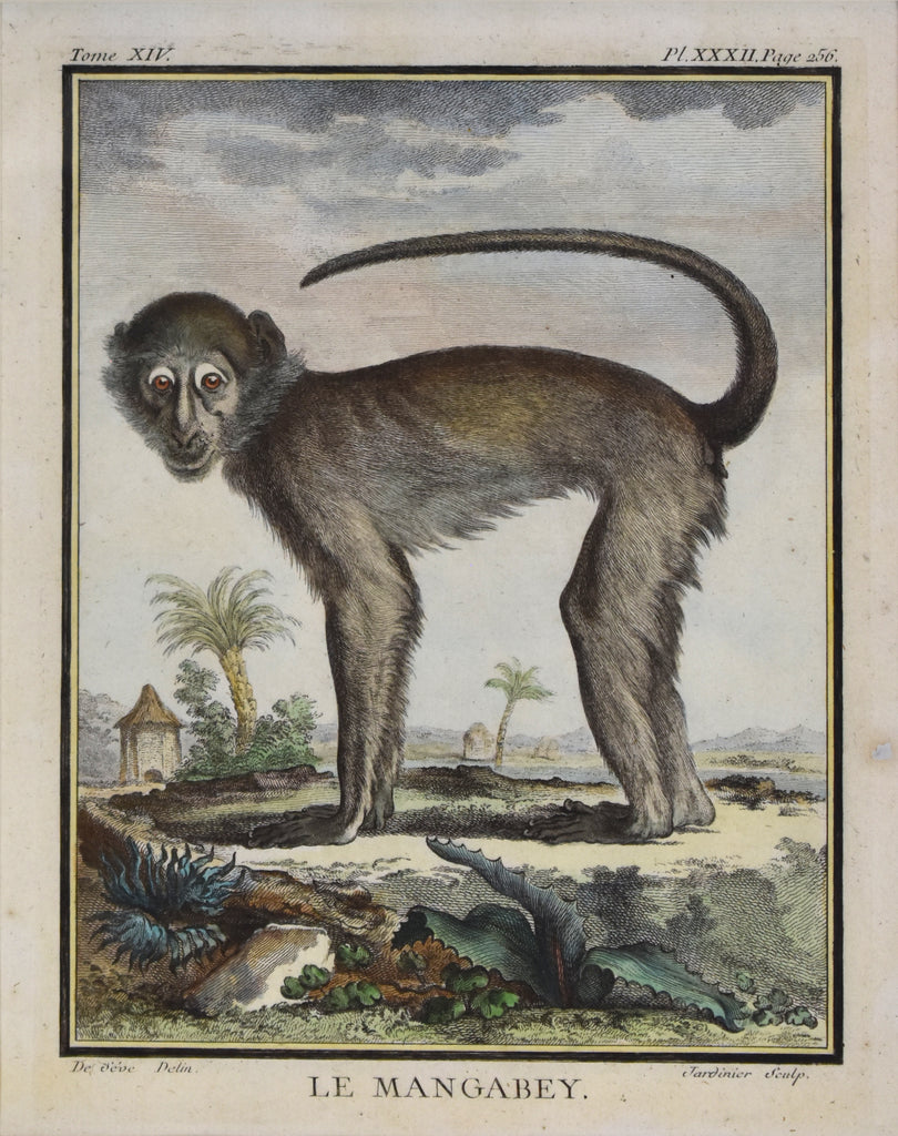 Antique print of a monkey