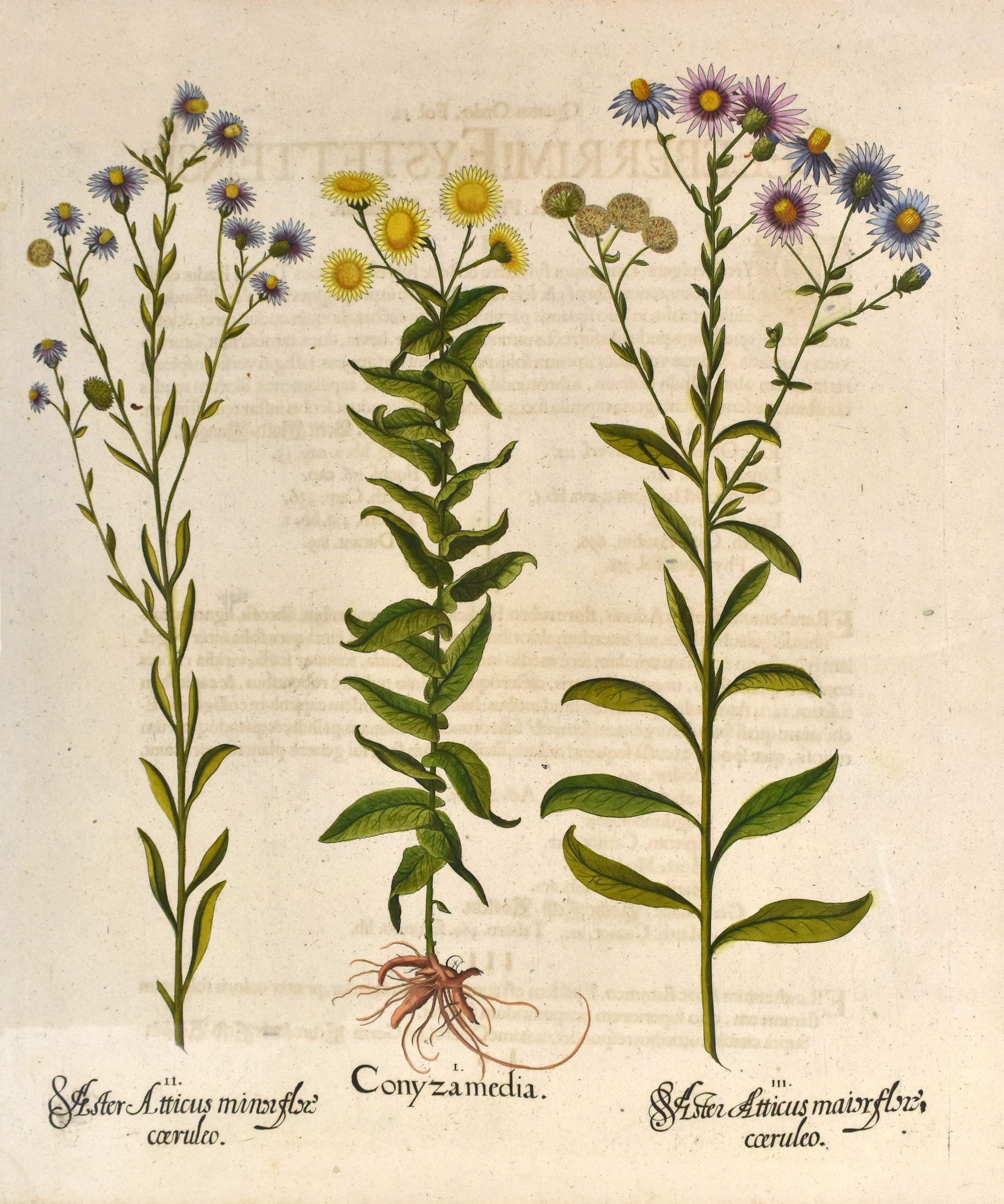 Old print of flowers
