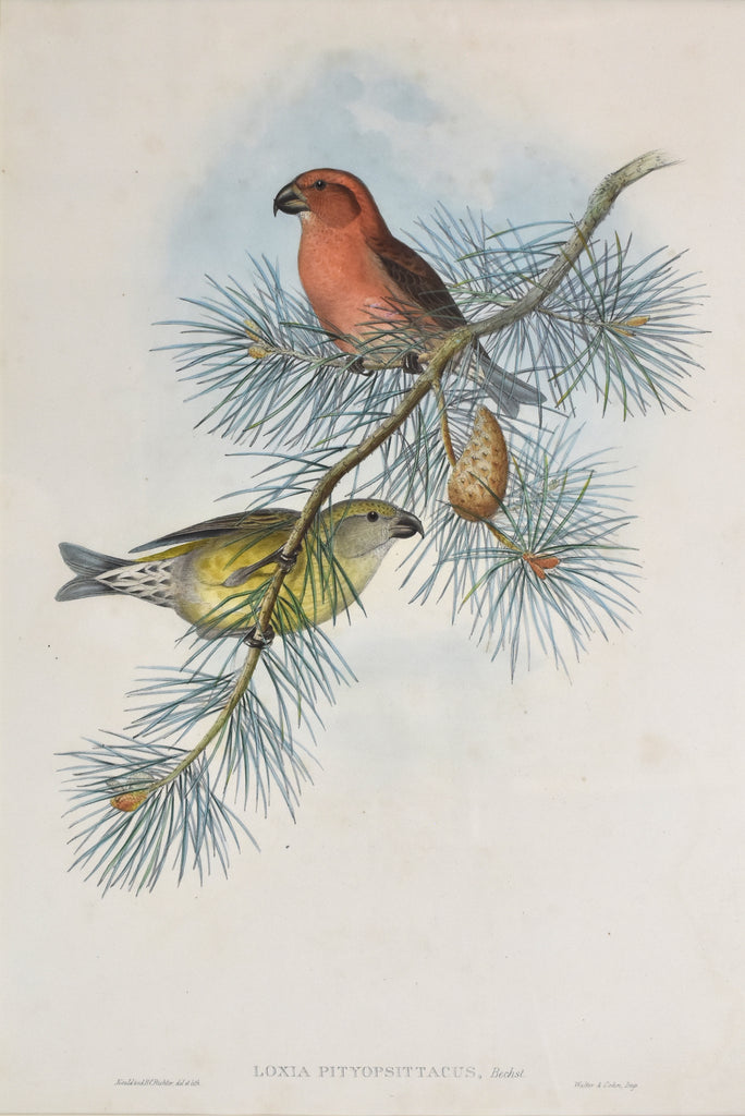 Antique print of two birds