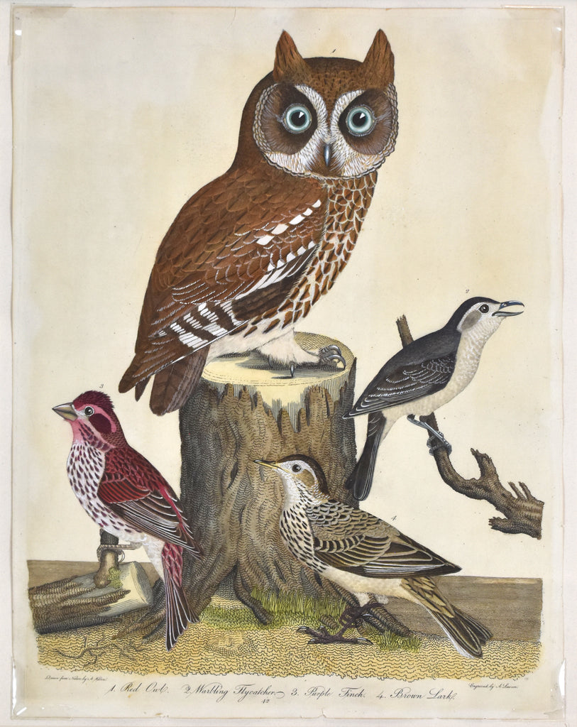 Old print of owl, finch, and lark