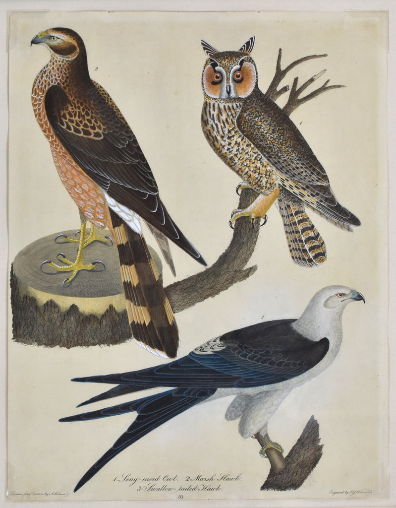 Old print of owl and hawks