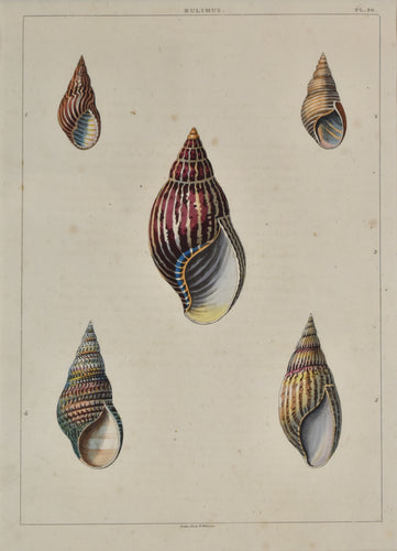 old print of five colorful snail shells