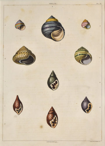 old print of colorful shells