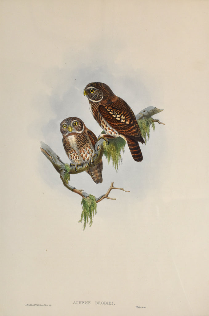 Antique print of two owls