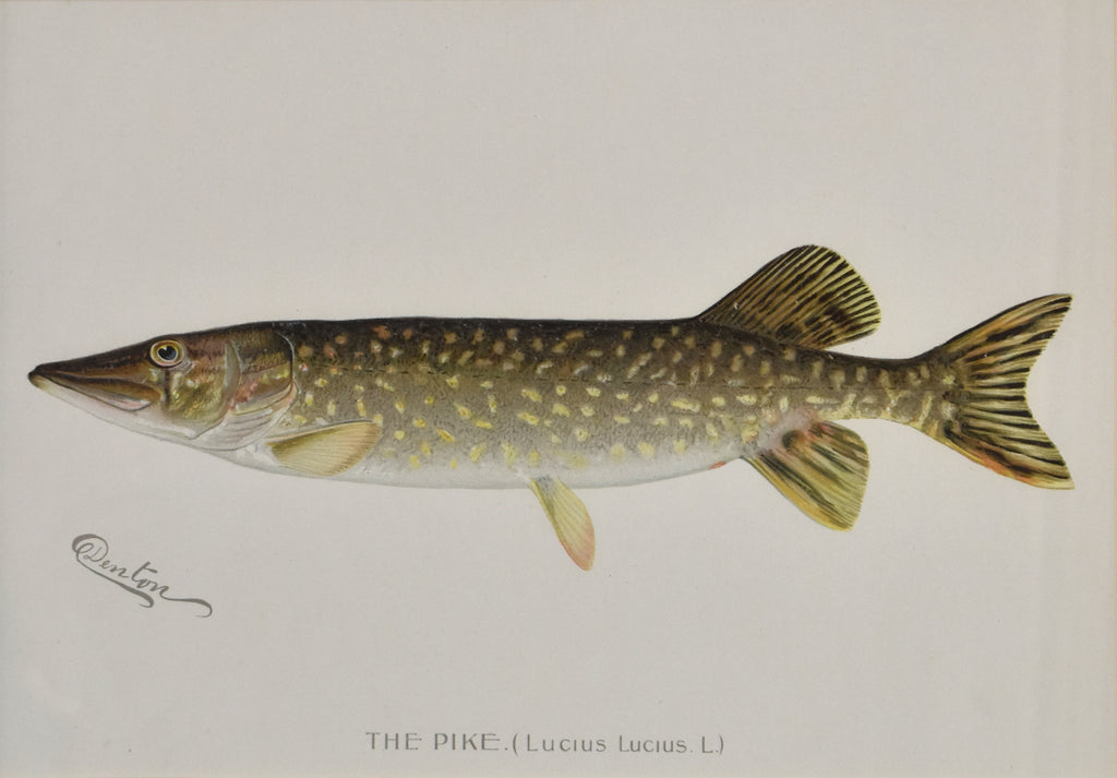 The Pike: Denton 1896