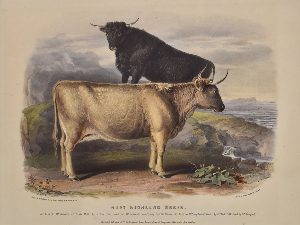 West Highland Breed: Low 1840