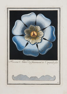 Rosette Taken From Ancient Fragments From The Capitol: Carlo Antonini 1781